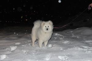 Моя собачка