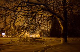 Зимний вечер в парке городском