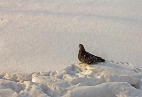 По глубокому снегу