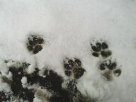 По первому снегу