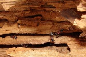 муравьиный гранд-каньон