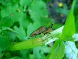Бесстрашный муравей