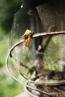 Короткая жизнь мотылька