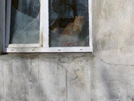 Кот, кошка и осколки стекла