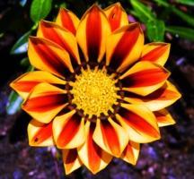 Цветочный орнаметр