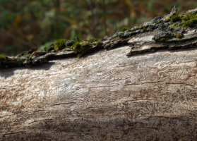 Мертвое дерево или типографика