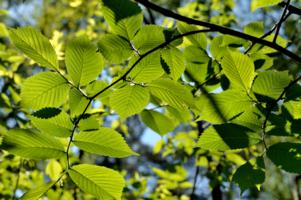 В тени листвы...