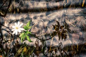 Загадки весеннего ручья