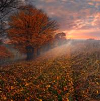 Осень как предчувствие