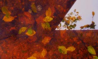 Раскраивает осень свой наряд...