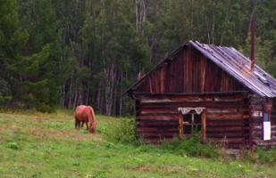 Конь гулял на воле....