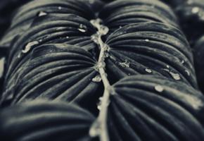 Симметрия под дождём
