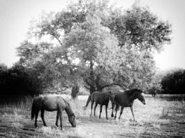 Кони, природы создания чудесные