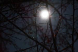 Пусть луна светит всем