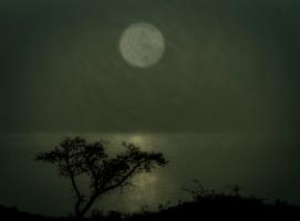 Магия лунного света