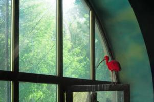 Мечты красного ибиса