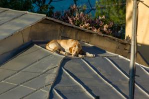 Самый здоровый сон - на крыше...