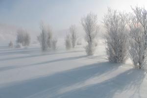 Зимний сад...зимний сад..