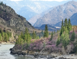 Весна в горном Алтае