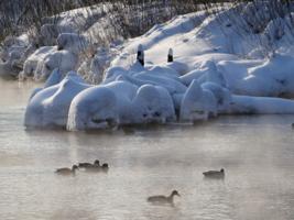 Зимние плавания.