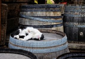 Дегустатор изысканных вин
