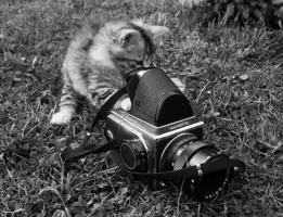 любопытство