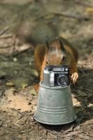 Сегодня фотограф - я!!!