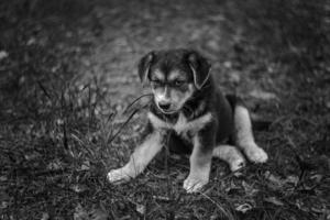 Тоска собачья