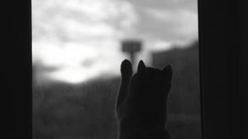 """Городская тоска """"по-котовьи"""""""