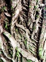 Вязание по дереву