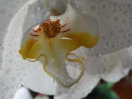 орхидня