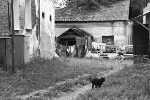 Будни старого дворика
