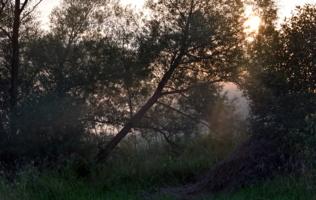 стог в лесу