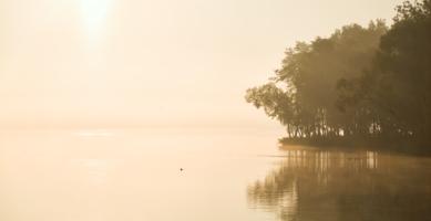 Утренний свет
