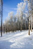 Красота истинно русской природы