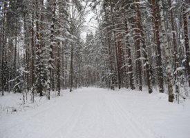 лыжня уходит вдаль