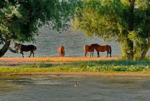 ходят кони к водопою...