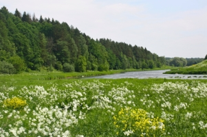 Лето на Москве-реке