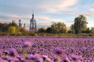 Пчелиный рай...