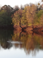На тихом озере.