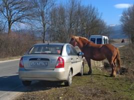 Встреча лошадинных сил