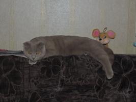 Плюшевый котик)