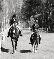Пони тоже кони.
