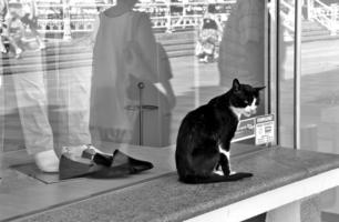 Кошки часто ходят без одежки..