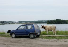 Лето в Простоквашино