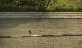 Про птицу и дорожного червя