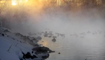 утренние утки