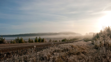 Уходящая в туман