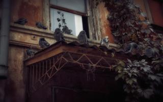 Голубчики