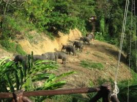 Девять слоников на удачу